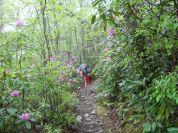 Appalachian Trail 456