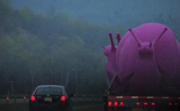 Giant Pink Snails spotted on Interstate 65 heading to Louisville (Courtesy William Morrow)