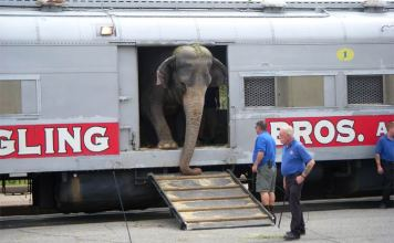 Ride a train in Louisville, if you're an elephant. (Courtesy Tipster)