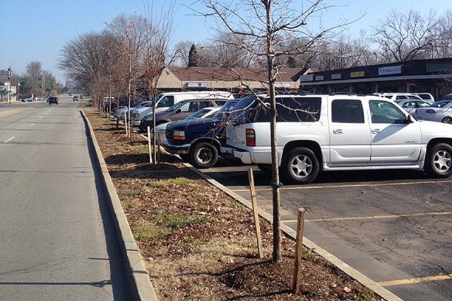 Brownsboro Road trees waiting on a settlement with the Kentucky Transportation Cabinet. (Courtesy Allen Bush)