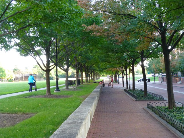 A tree-lined streetscape in Columbus, Ohio. (Eric Fredericks / Flickr)