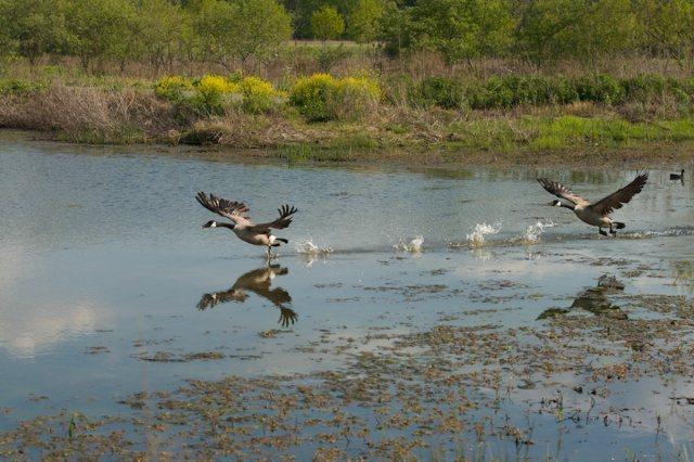 A scene at the Parklands of Floyds Fork. (John Nation)