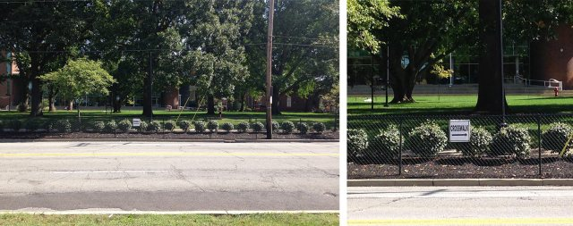The University of Louisville's approach to street safety is to install a fence. (Branden Klayko / Broken Sidewalk)