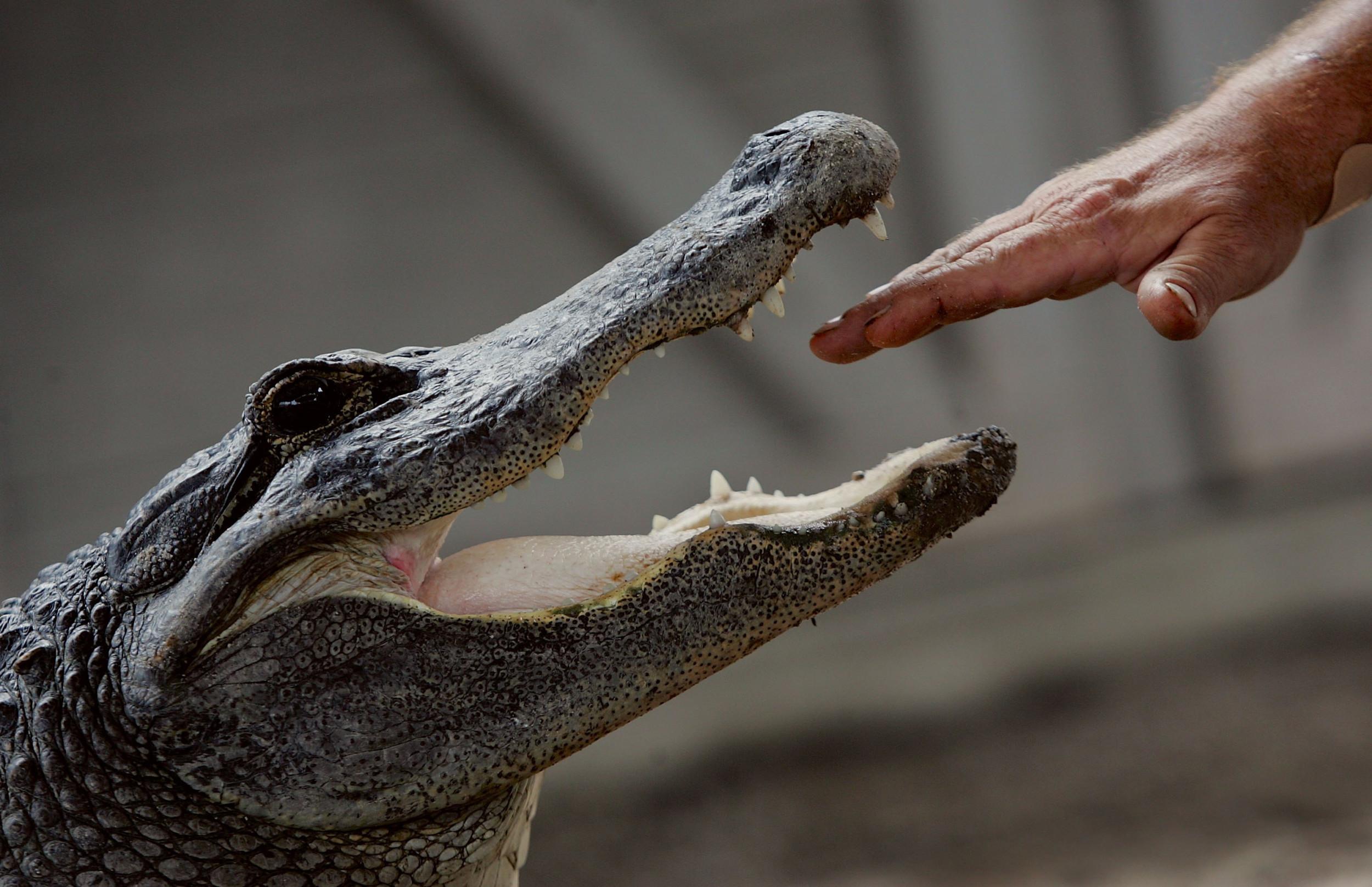 Trading Forex Dengan Indikator Alligator - Broker Forex ...