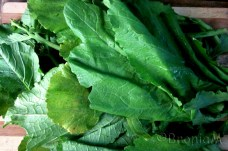 Green leafy veggie.