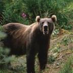 """Vad hette """"björn"""" på bronsåldern?"""