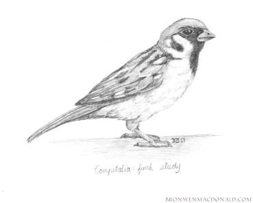 2017-01-09 Compitalia - Finch Study Web