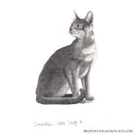 2017-01-18 Compitalia - Kitten Study II web