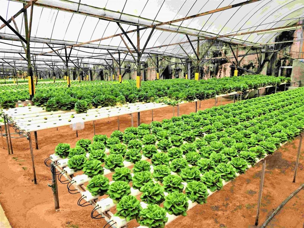 溫室蔬菜栽培