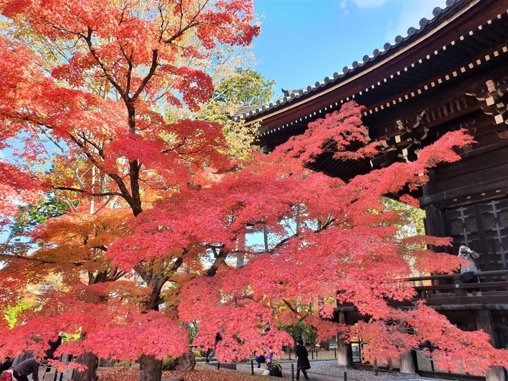 京都游学 - 京都枫红时节 照片来源: 网友秀芬