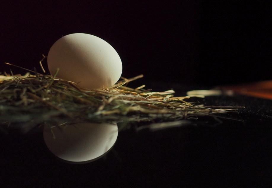 Luxurious household eggs incubator Broody ZOOM