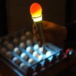 8 день инкубации. Миражирование яиц. Овоскоп