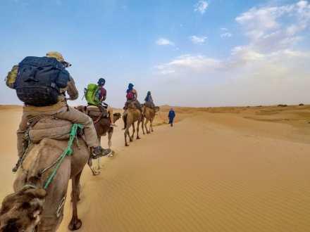 Camel procession