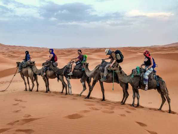 Our camel convoy