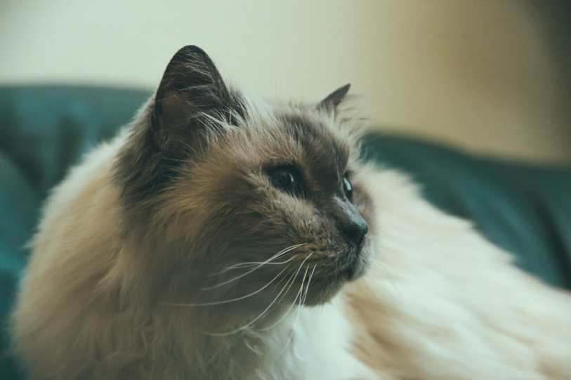 Had to visit my favourite furry girl (turning 21 next year!)