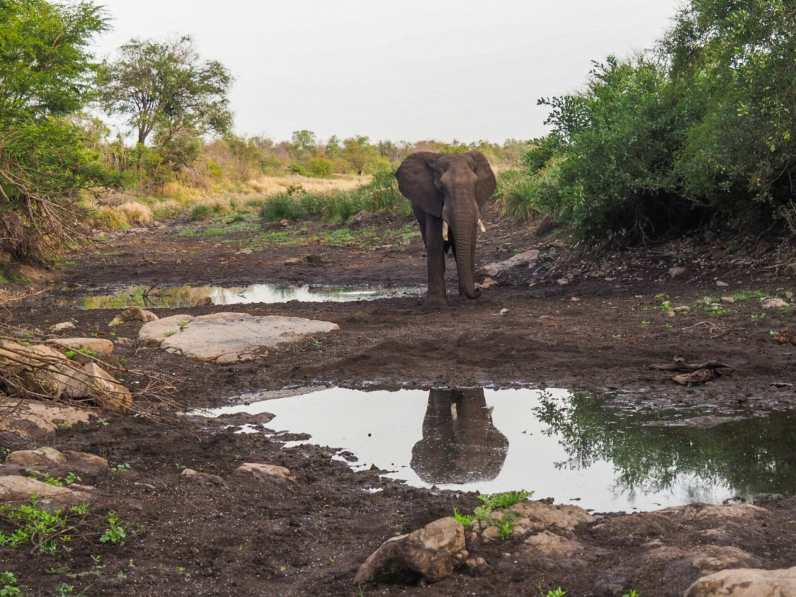 Elephant admiring his reflection