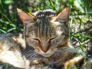 Little African wild cat