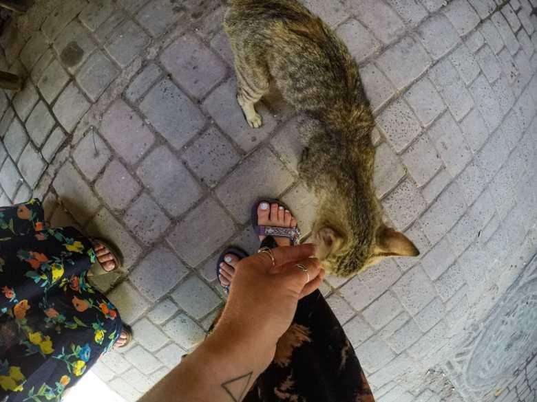Sweet little Moroccan kitties