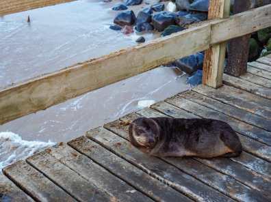 This seal nearly bit my leg off, no joke.
