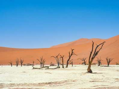 Strange dead trees on Deadvlei