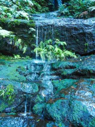 Little cascades all over the forest