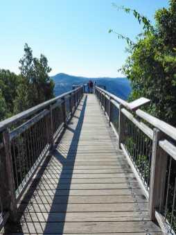 The Sky Walk from Dorrigo Rainforest Centre