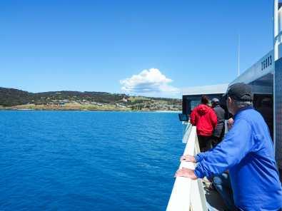 Dolphin-spotting off the Kangaroo Island ferry