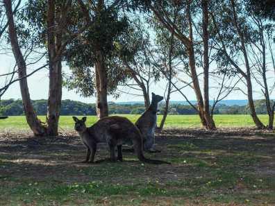 Some of the local wildlife on KI