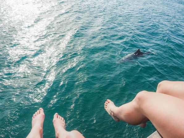 Enjoying the amazing wild dolphins at Amity Point