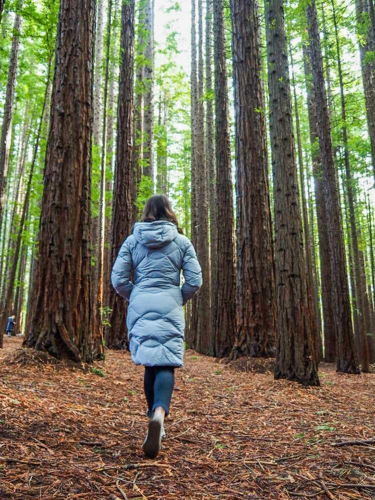 Walking among giants