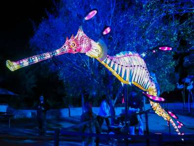 Beautiful seahorse at Lights for the Wild