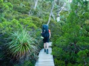 Callum enjoying a lush green forest