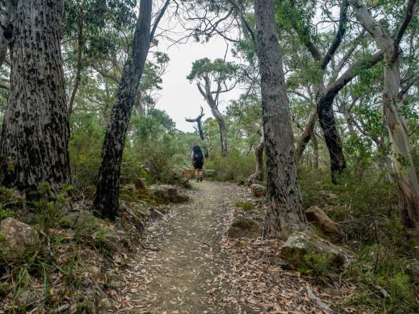 Walking through the blackened eucalypt forest