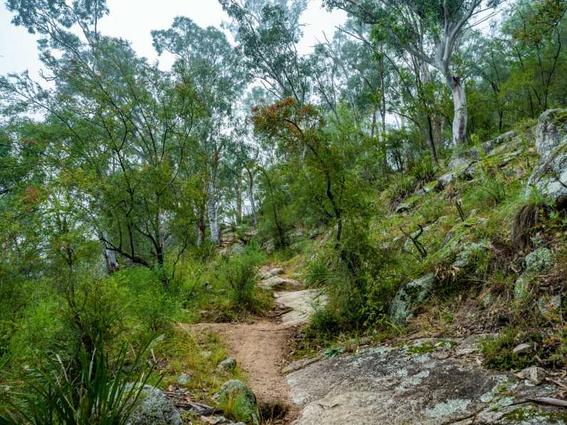 Nice uphill trail through the trees to Megalong Valley