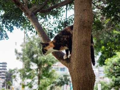 Kitty in Parque Kennedy