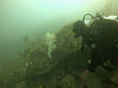 Scuba diving in Milford Sound
