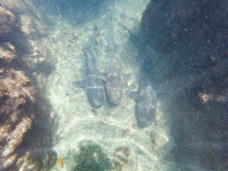 Sharks at Las Tintoreras