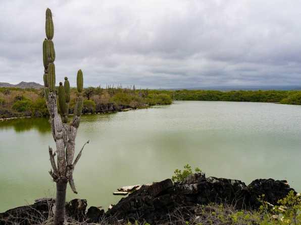 Green lagoon on Isla Isabela
