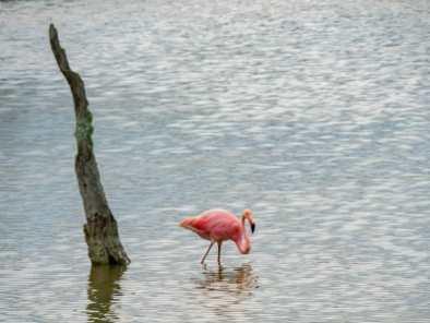 Flamingos at Pozas Salinas