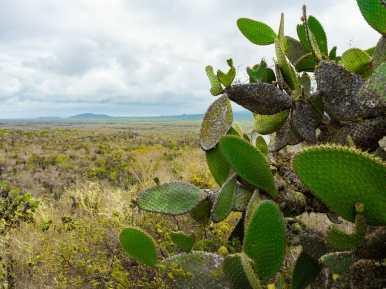 Cacti on Isla Isabela