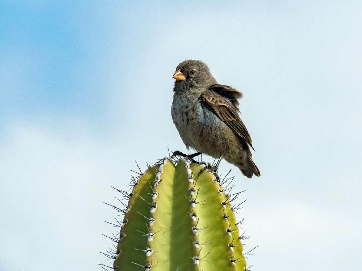 Cactus at Los Tuneles