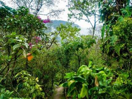 Garden in Baños Ecuador
