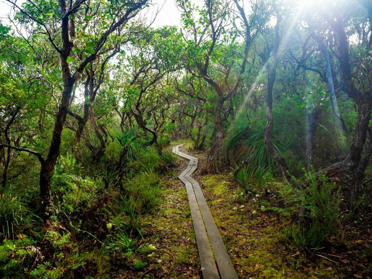 Great Ocean Walk hike Australia manna gum forest