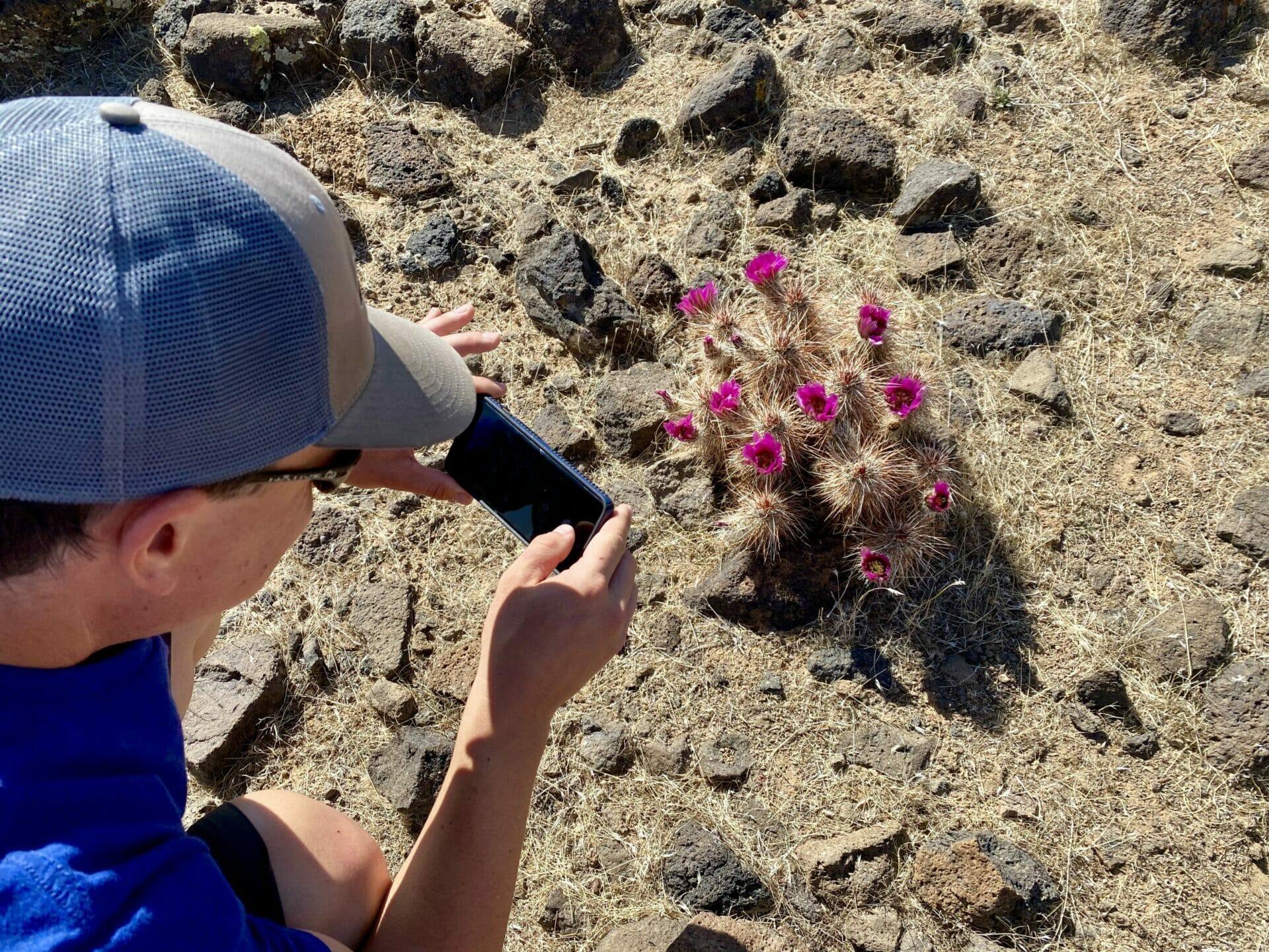 Cactus in bloom Arizona Kingman Monolith Garden