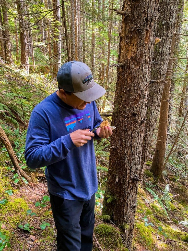 Mt Baker National Forest mushroom foraging chanterelles