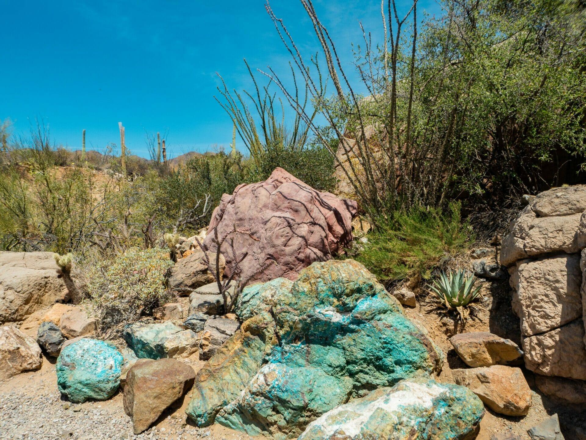 Desert Museum Arizona Sonoran Saguaro National Park