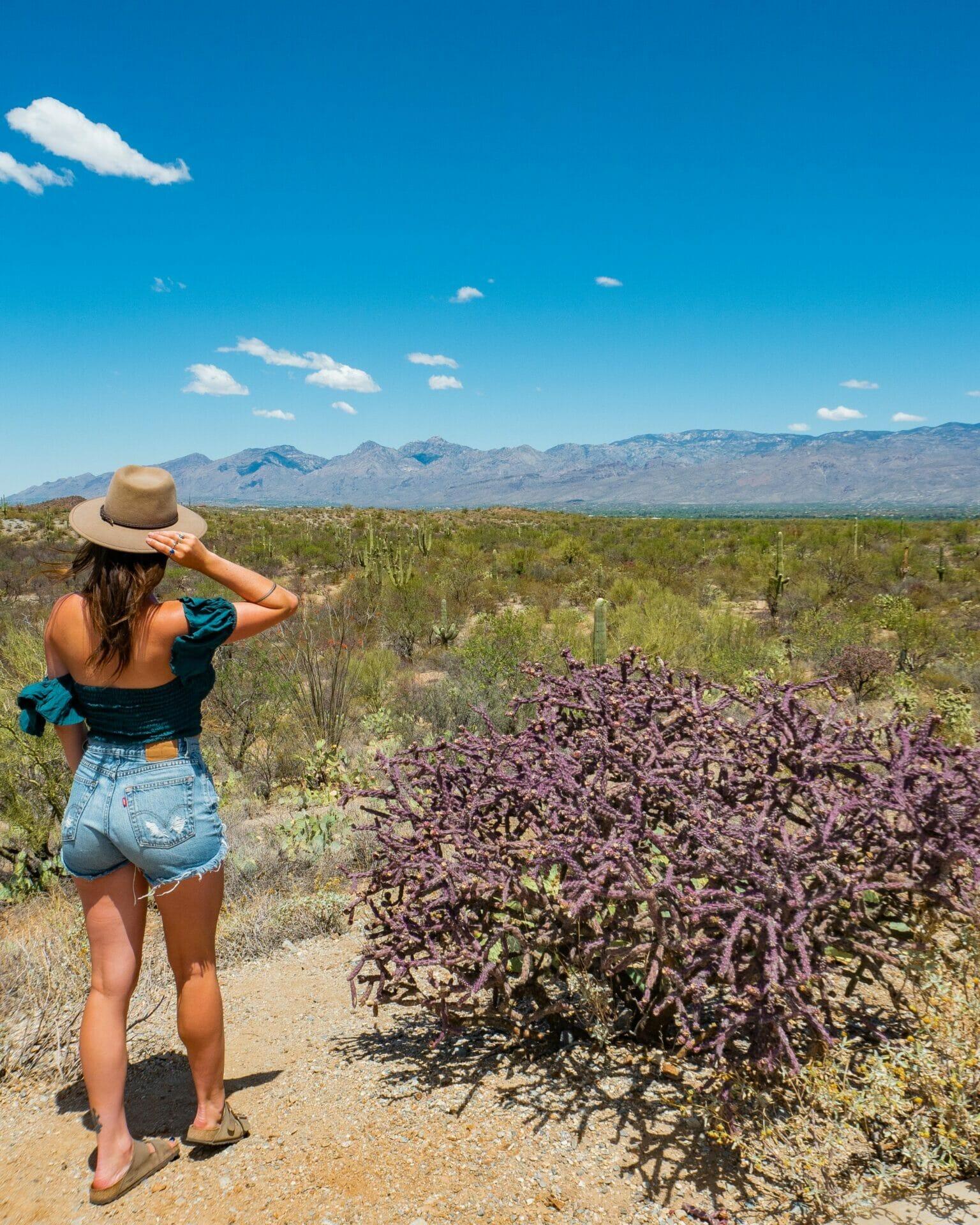 Saguaro National Park Cactus Forest Loop Drive