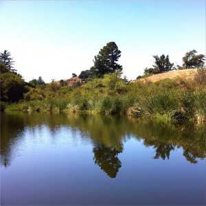 Pond at Russian Ridge Open Space Nature Center. #reflection #nofilter