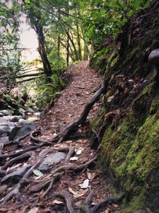 an uphill trail obstructed with roots and rocks