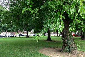 Brookland Green